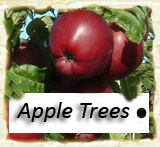 Click to go to the first page of Apple Trees