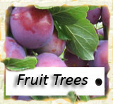 Click to go to all other Fruit Trees
