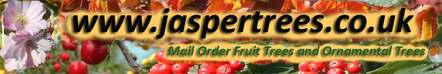 www.jaspertrees.co.uk - High quality Fruit Trees and Ornamental Trees by Mail Order - Direct from the grower.